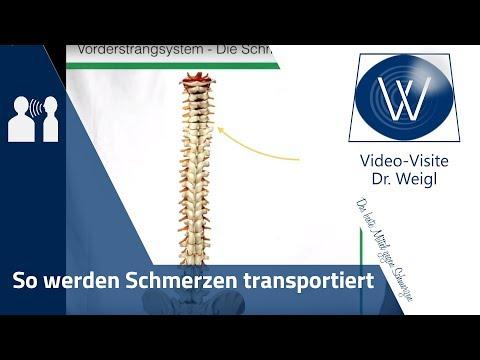 Was sind Schmerzen? Schmerz & Schmerzweiterleitung: Vom Rückenmark bis Gehirn | Schmerz verstehen