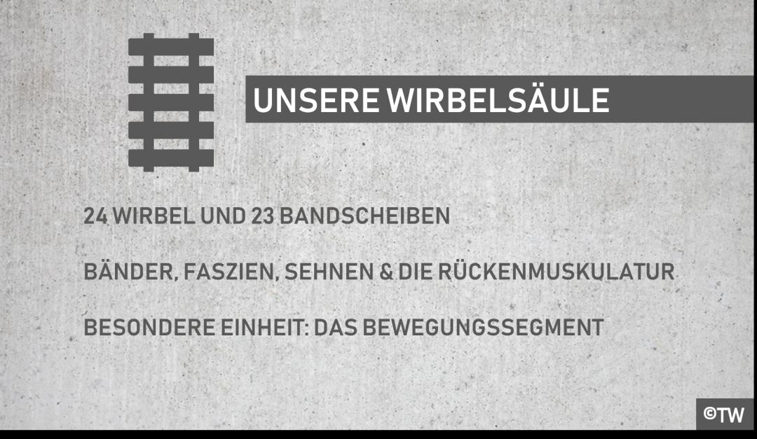 DoktorWeigl.de erklärt Die Bestandteile unseres Rückens und unserer ...