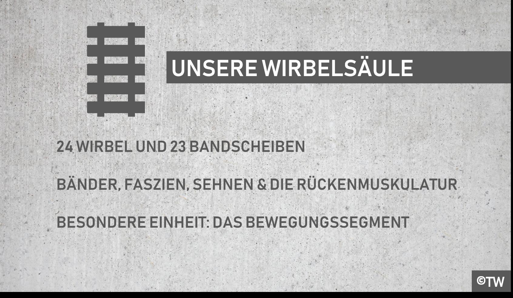 Fein Zahl Der Wirbel Ideen - Physiologie Von Menschlichen ...