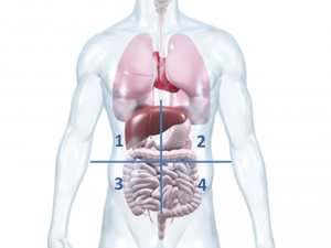 Doktorweiglde Erklärt Bauchschmerzen Rechts Unterbauchschmerzen