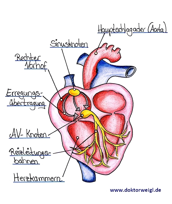 Herz seite linken stechen der auf Leichtes Stechen