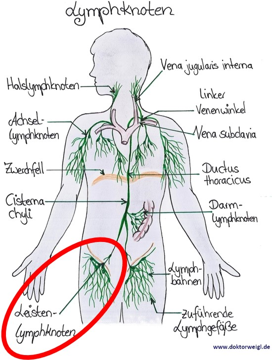 Lymphknoten achsel