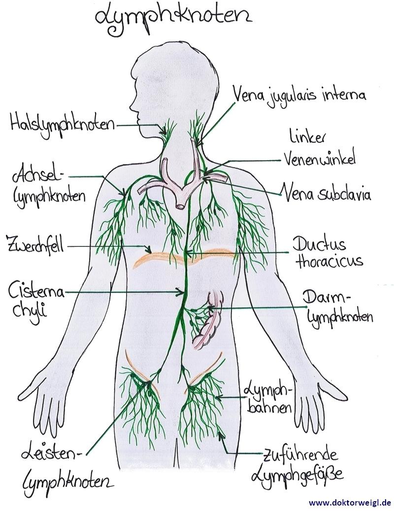 schmerzende lymphknoten