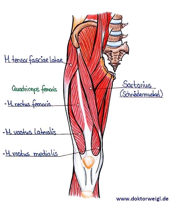 Beinschmerzen nicht ignorieren: Mögliche Ursachen für Schmerzen im Bein