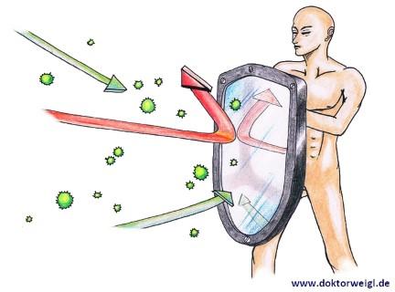 Immunsystem Immunabwehr